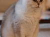 fotos-katten-nov-2012-025