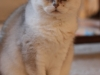 fotos-katten-nov-2012-026_0