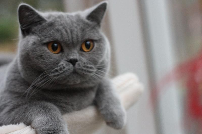 fotos-katten-nov-2012-081