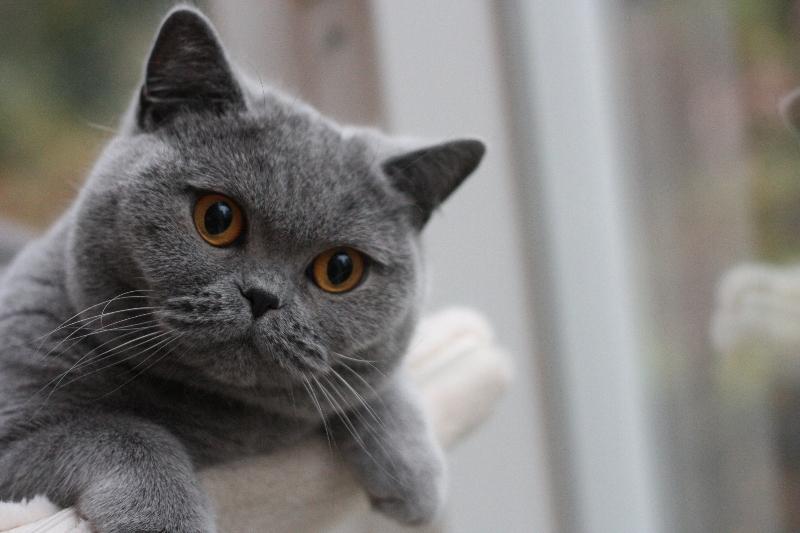 fotos-katten-nov-2012-082