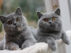 fotos-katten-nov-2012-086
