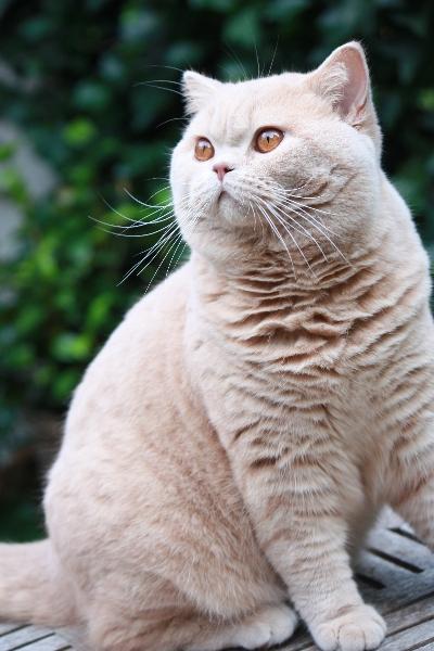 kittens-2012-081