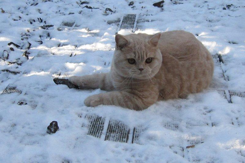 quirino-2012-snow