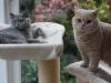 fotos-katten-nov-2012-031