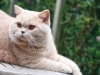 kittens-2012-126