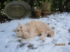 quirino-2012-snow2