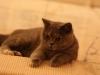 fotos-katten-nov-2012-071