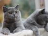 fotos-katten-nov-2012-089