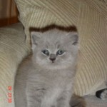 h-kitten