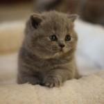 l_kitten_01
