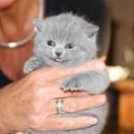 l_kitten_02