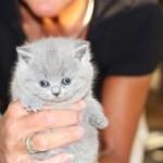 l_kitten_03