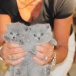 l_kitten_04