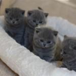 l_kitten_05