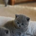 l_kitten_06