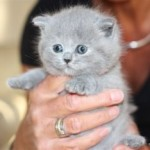 l_kitten_07