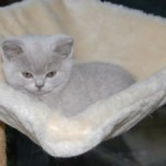 unique_kittens01