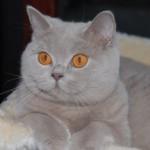 unique_kittens02