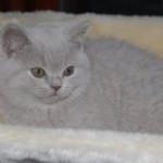 unique_kittens03