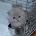 unique_kittens05