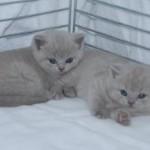 unique_kittens06