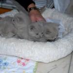 unique_kittens07