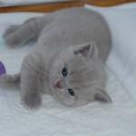 unique_kittens08
