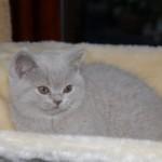 unique_kittens09