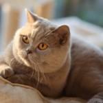 unique_kittens