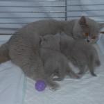 unique_kittens10