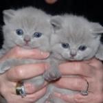 unique_kittens11