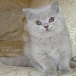 unique_kittens12
